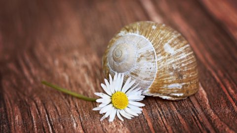 Lesson from the snails